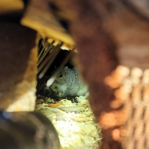 Rodent removal Services in New York